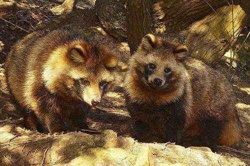 Фото и описание самых странных и необыкновенных животных мира 12