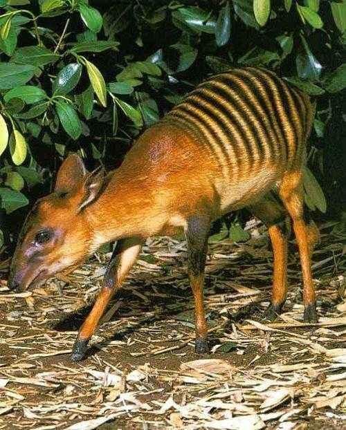 Фото и описание самых странных и необыкновенных животных мира 10
