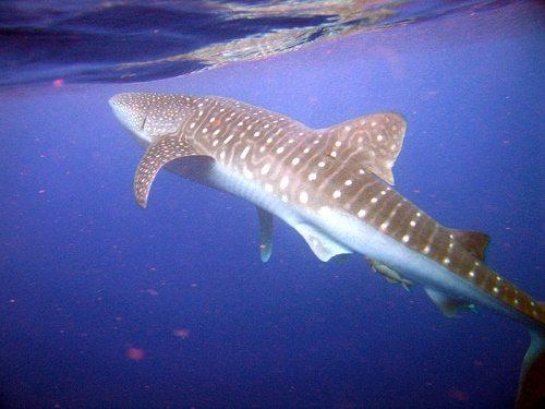 Фото и описание самых крупных рыб в мире 2