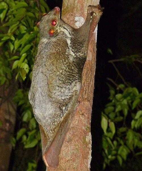 Фото и описание самых странных и необыкновенных животных мира 9