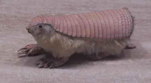 Фото и описание самых странных и необыкновенных животных мира 2
