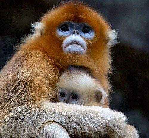 Фото и описание самых странных и необыкновенных животных мира 15