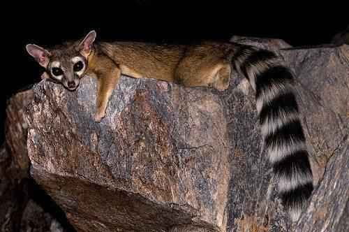 Подборка редких и малоизвестных животных США 4