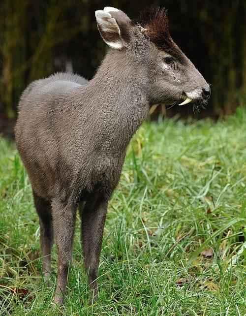 Фото и описание самых странных и необыкновенных животных мира 4