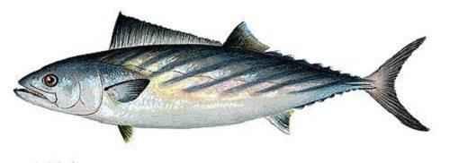 Какие рыбы самые быстрые в мире 6