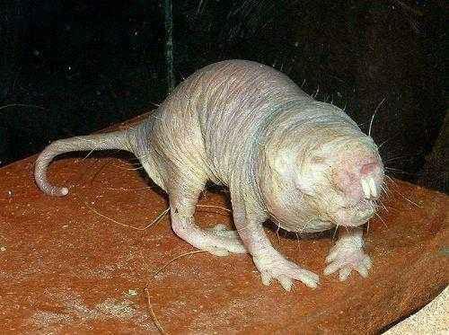 Фото и описание самых странных и необыкновенных животных мира 6
