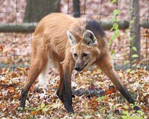 Фото и описание самых странных и необыкновенных животных мира 16