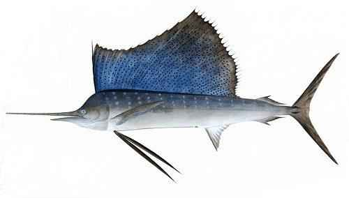 Какие рыбы самые быстрые в мире 2