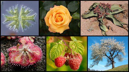 Признаки и особенности всех царств живой природы 6