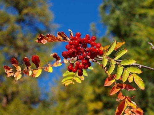 Растительный мир Урала - список, характеристика и фото 11