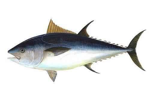 Какие рыбы самые быстрые в мире 5