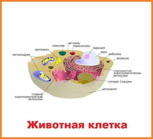 Сравнение строения животных, растительных, грибных и бактериальных клеток 5
