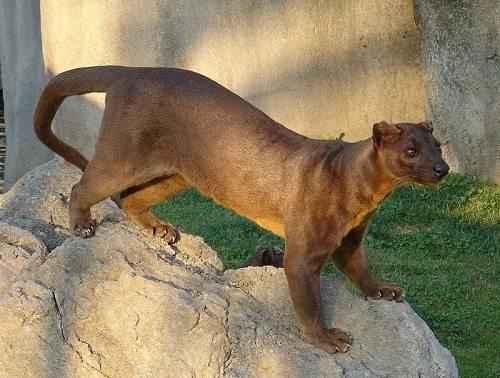 Фото и описание самых странных и необыкновенных животных мира 3