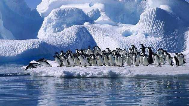 Самые известные представители животного мира Тихого океана 2