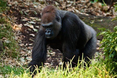 Животный мир тропических дождевых лесов 5