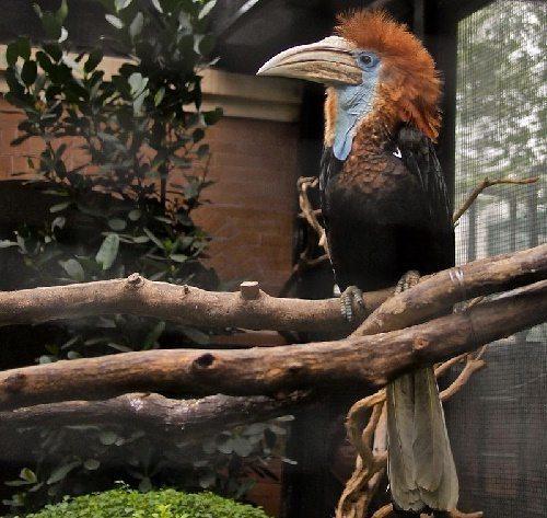 Животный мир тропических дождевых лесов 14