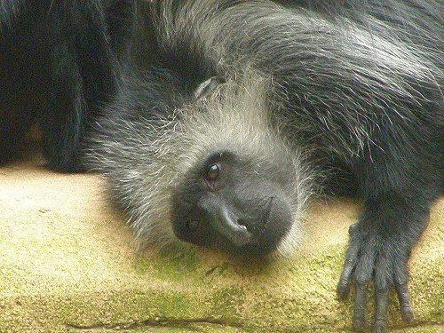 Животный мир тропических дождевых лесов 17