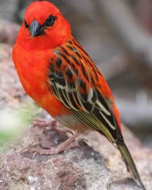 Эндемичные и редкие животные острова Мадагаскар 8