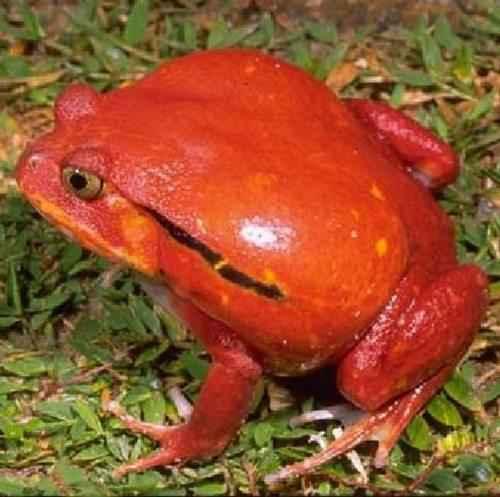 Эндемичные и редкие животные острова Мадагаскар 7
