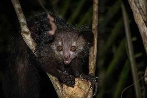 Эндемичные и редкие животные острова Мадагаскар 10