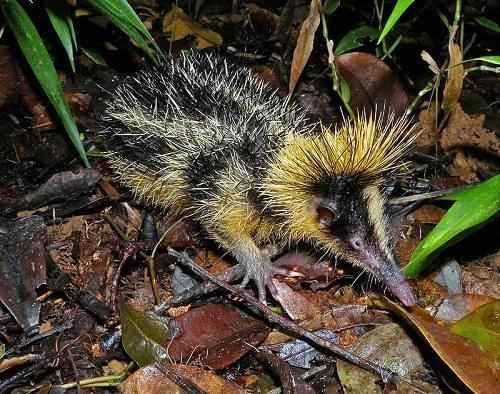 Эндемичные и редкие животные острова Мадагаскар 12