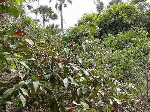 Характеристика, животный и растительный мир саванны Африки 15