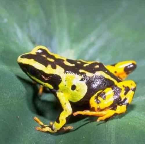 Эндемичные и редкие животные острова Мадагаскар 13