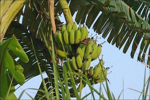 ТОП 10 удивительных растений тропических дождевых лесов