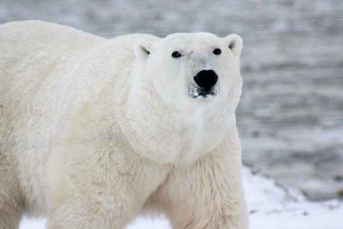 Какие виды животных самые крупные на Земле - список, характеристика и фото 3