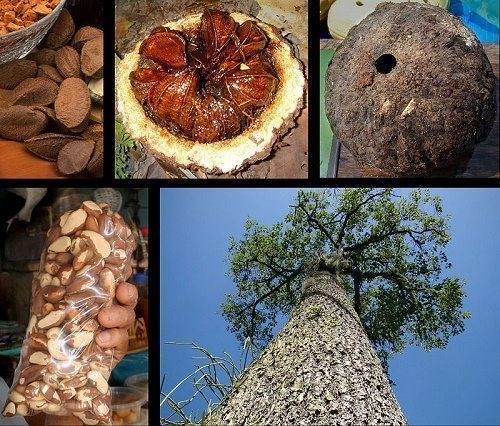 Растения тропических лесов: список, виды, названия, описание и фото 5