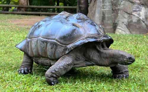Какие животные имеют самую большую продолжительность жизни? 8
