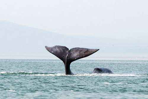 Какие животные имеют самую большую продолжительность жизни? 7