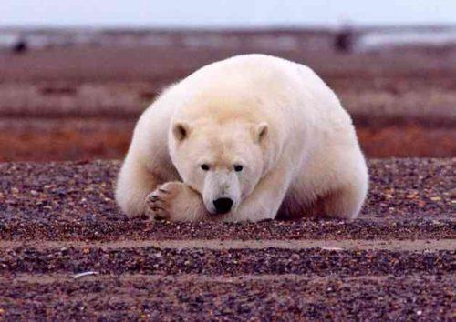 Какие виды животных самые опасные на Земле - список, характеристика и фото 9
