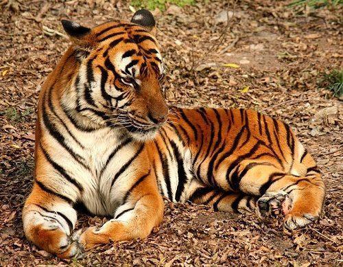 Самые удивительные и редкие представители животного мира Китая 3