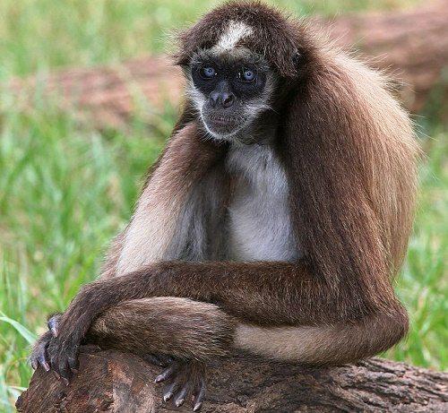 Животный мир тропических дождевых лесов 12
