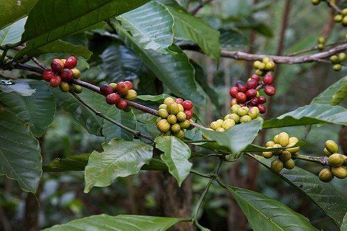 Растения тропических лесов: список, виды, названия, описание и фото 4