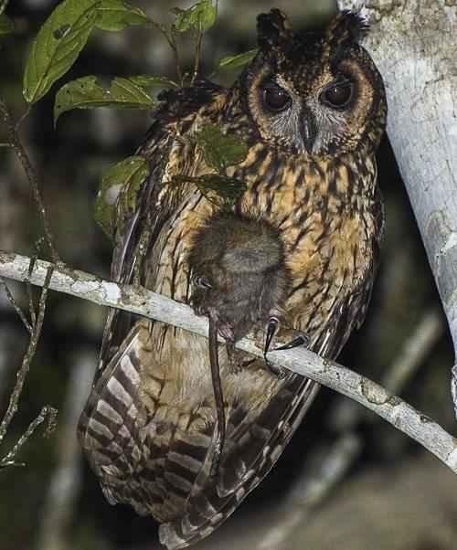 Эндемичные и редкие животные острова Мадагаскар 11