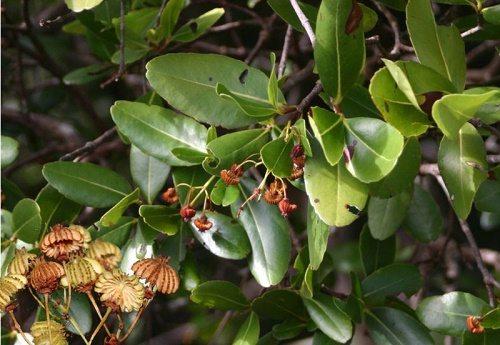 Фото и краткая характеристика самых редких растений на планете 7