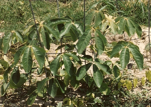 Характеристика, животный и растительный мир саванны Африки 16