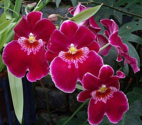 Растения тропических лесов: список, виды, названия, описание и фото 3