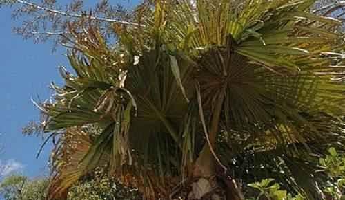 Фото и краткая характеристика самых редких растений на планете 3