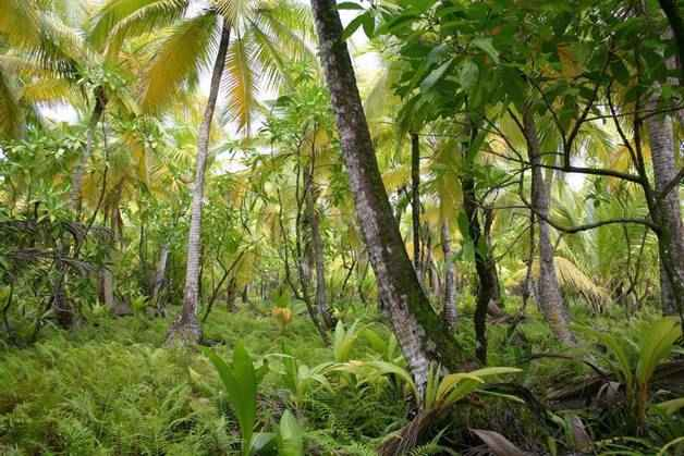 Животный и растительный мир тропиков