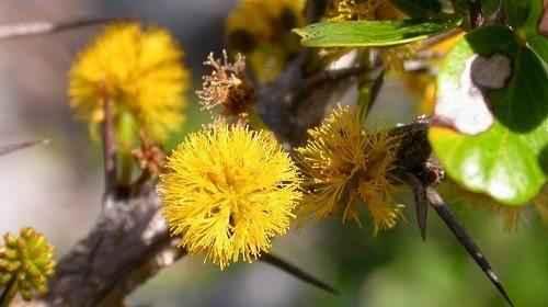 Фото и краткая характеристика самых редких растений на планете 8