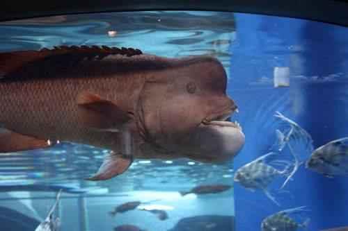 Самые удивительные, необычные и ужасные рыбы в мире 3