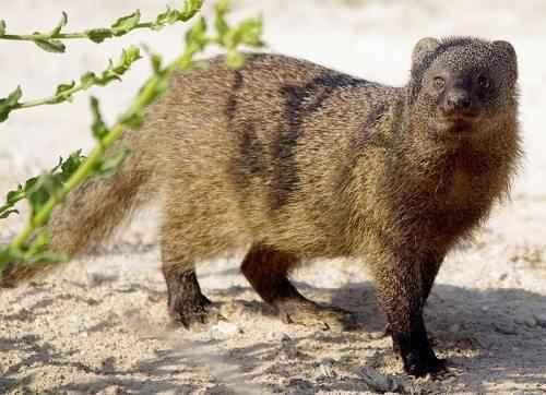Характеристика, животный и растительный мир саванны Африки 7