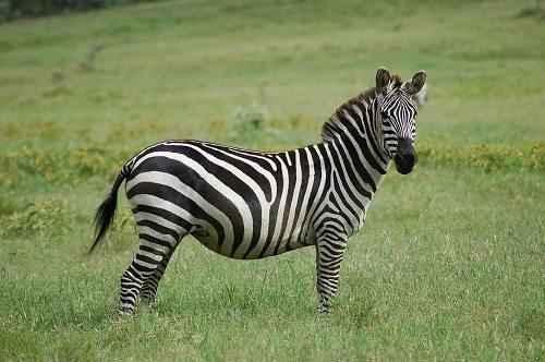 Характеристика, животный и растительный мир саванны Африки 8