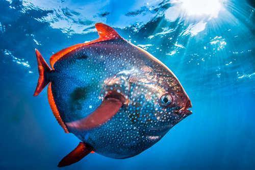 Самые удивительные, необычные и ужасные рыбы в мире 6