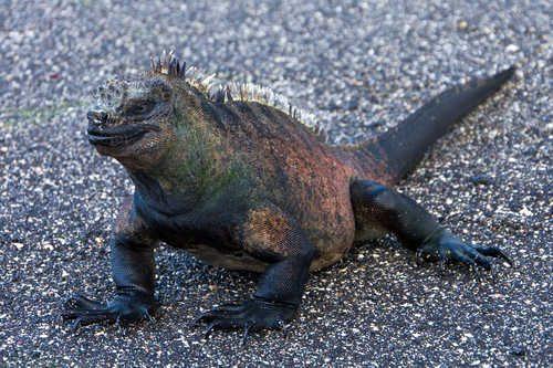 Самые необычные и удивительные ящерицы на Земле 3