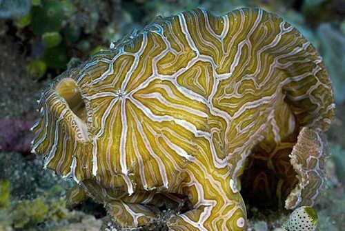 Самые удивительные, необычные и ужасные рыбы в мире 5