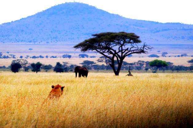 География Африки: геология, климат, пустыни, водоемы, природные ресурсы и экология 8